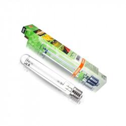 Ampoule Plantastar 250W - Osram