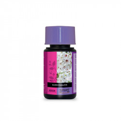 engrais atami BLOOM STIMULATOR 50ML - ATAMI