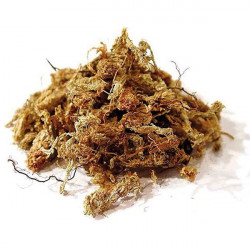 Sphagnum moss from Chile - 1 Kg