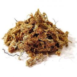 Sphaigne du Chili - 150 g