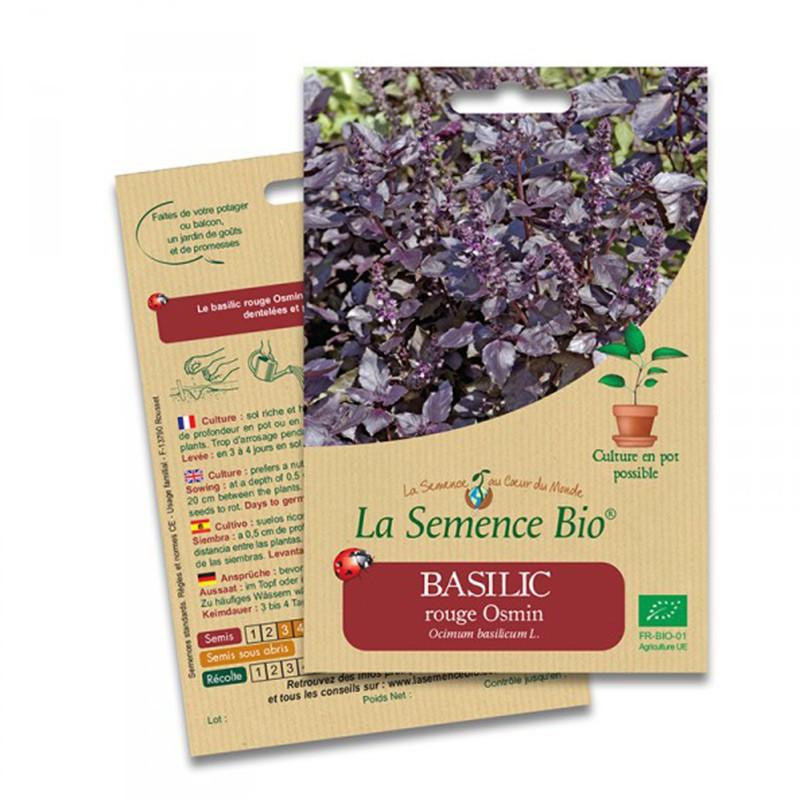 Organic Seeds - Basil Rouge Osmin