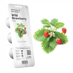 RECHARGE STARWBERRY CLICK & GROW