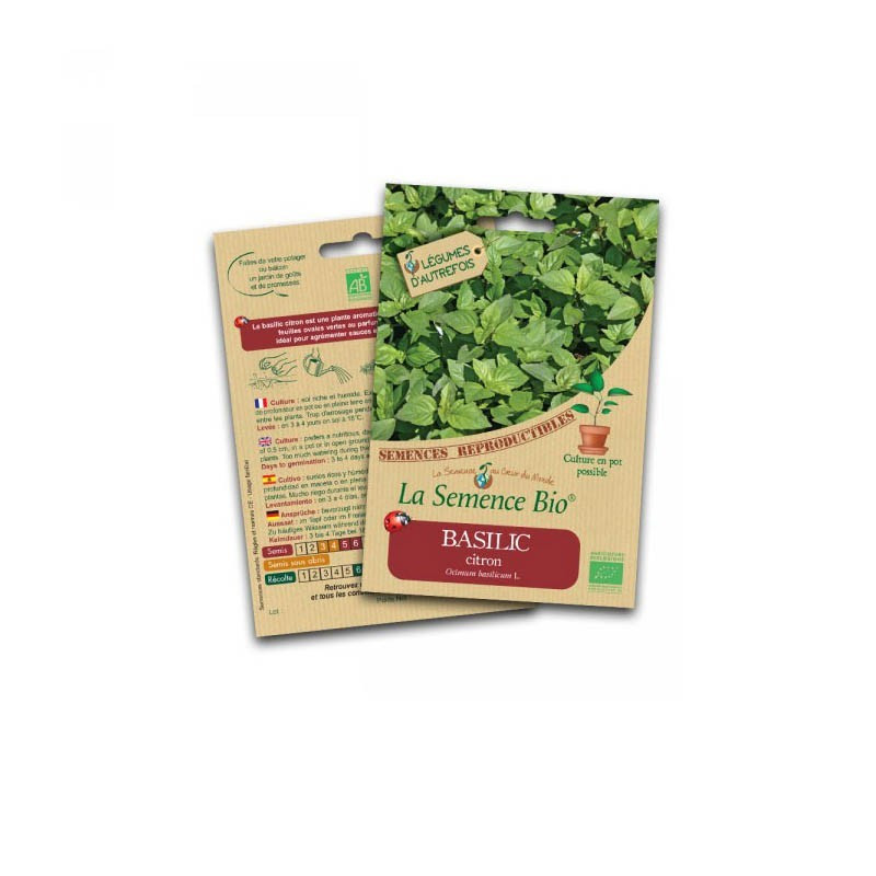 Graines Bio - Lemon Basil - Organic Seed