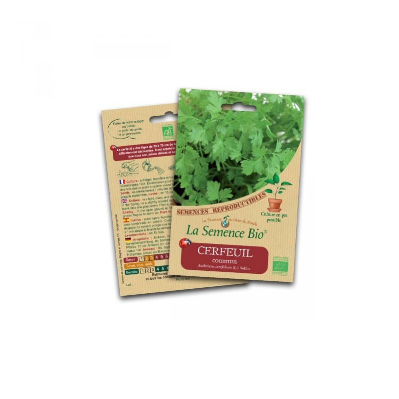 Graines Bio - Common chervil - Organic seed