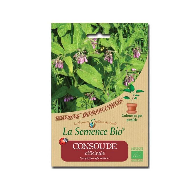 Graines Bio - Comfrey - Organic seed
