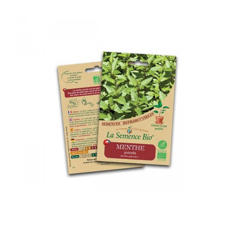Graines Bio - Peppermint - Organic Seed