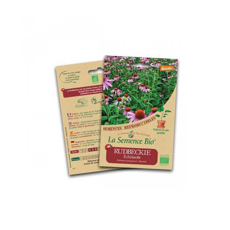 Graines Bio - Rudbeckie Echinacea - Organic Seed