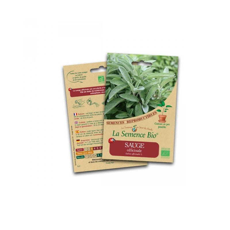 Graines Bio - Sage officinale - Organic Seed