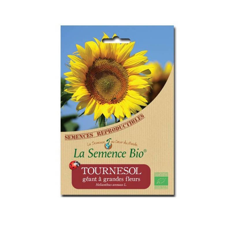 Graines Bio - Giant sunflower - Organic seed