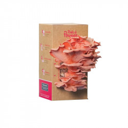 Organic seeds - Bunch of oyster mushrooms pink - Ready to push