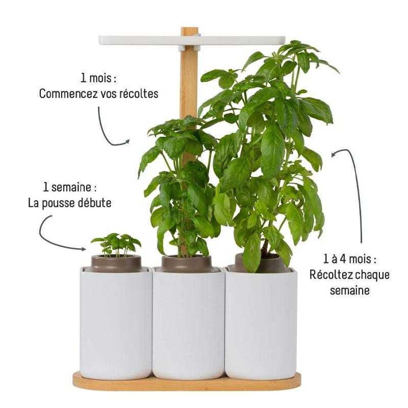 Mini indoor garden Lilo (basil, mint, chives) - Prêt à pousser