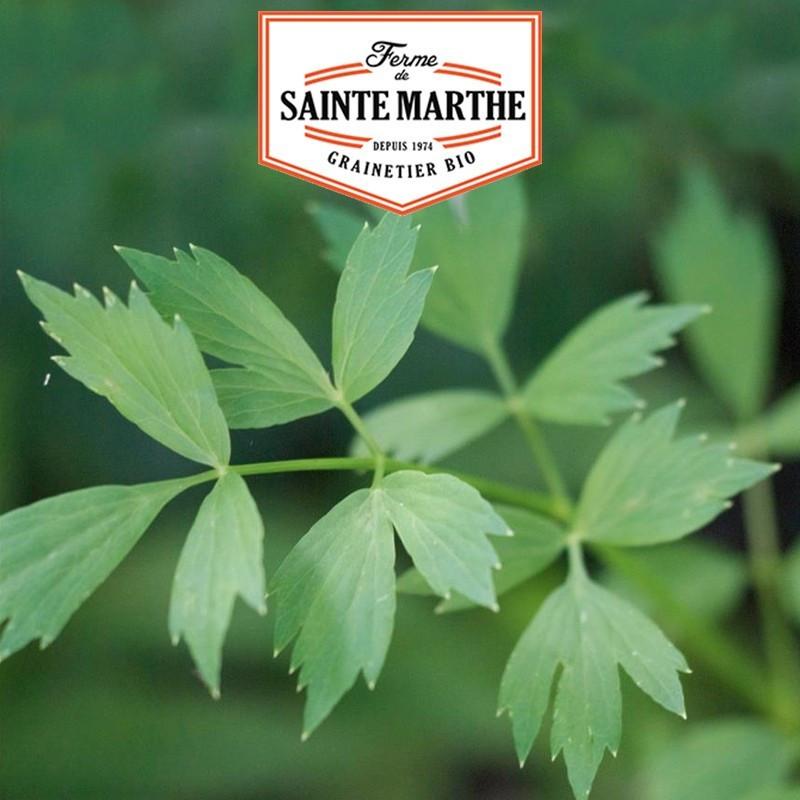 Basilic Thaï - 200 graines - La ferme Sainte Marthe