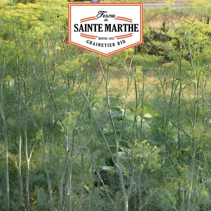 <x>La ferme Sainte Marthe</x> - 200 Dill Hera seeds