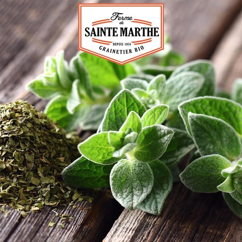 <x>La ferme Sainte Marthe</x> - 300 seeds Oregano