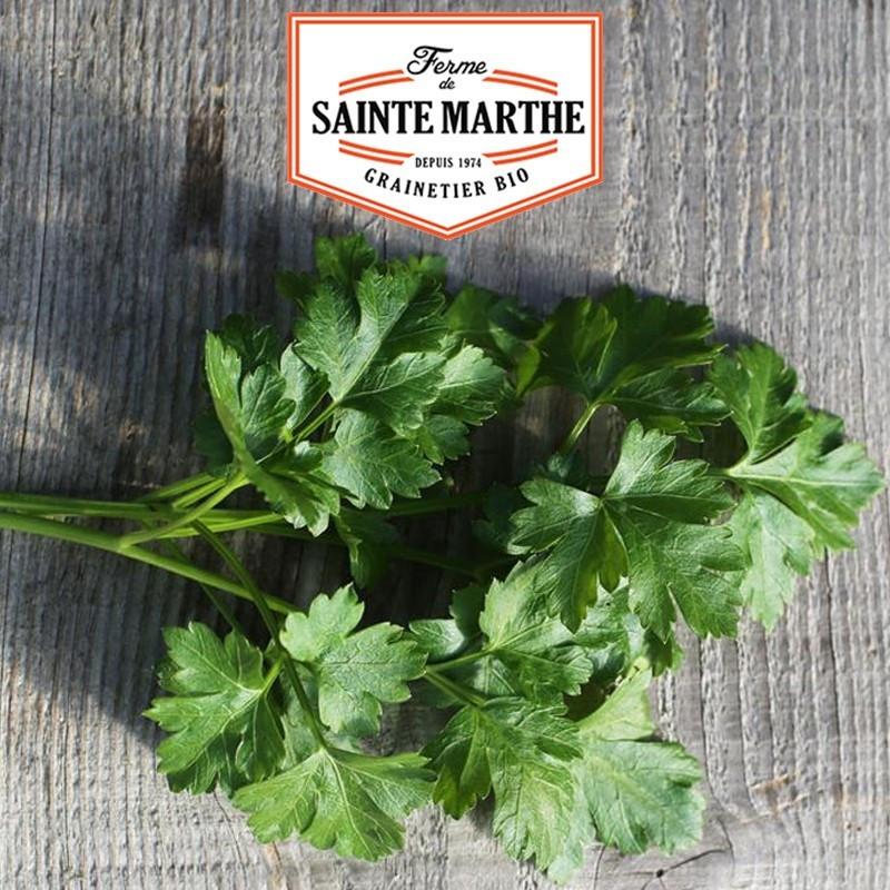 <x>La ferme Sainte Marthe</x> - 1000 seeds Parsley Gigante d'Italia