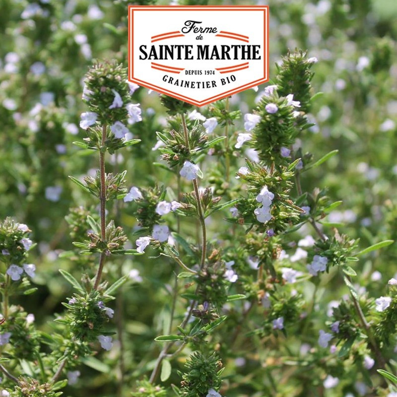 <x>La ferme Sainte Marthe</x> - 500 seeds Savory