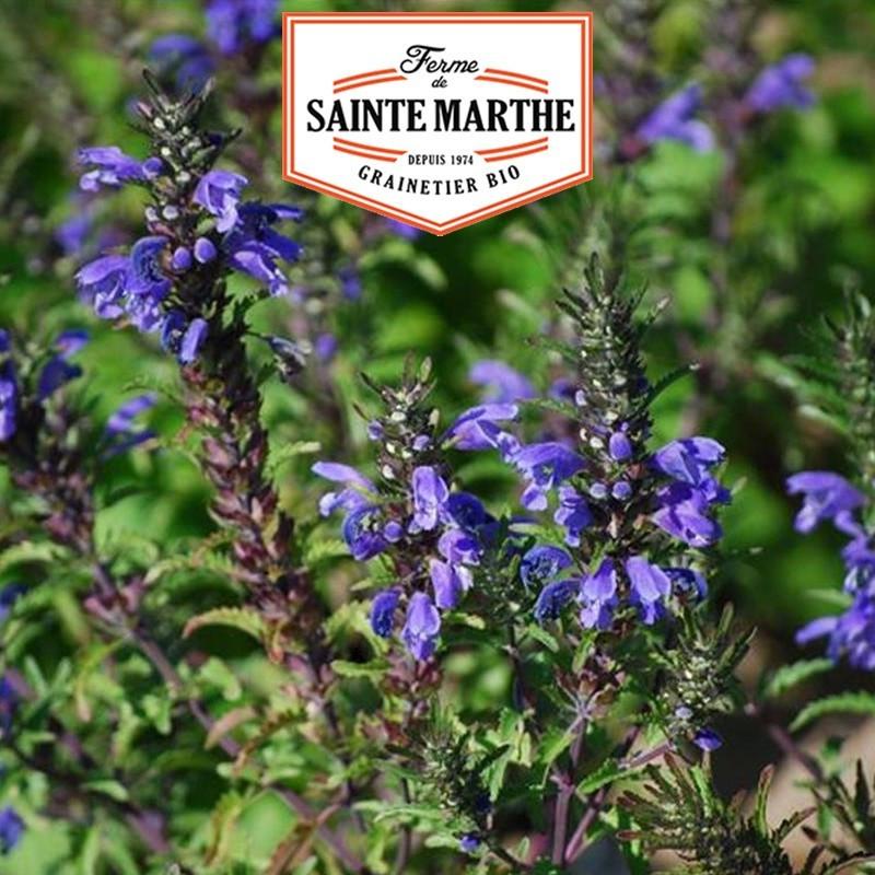 <x>La ferme Sainte Marthe</x> - 200 seeds Garden Tea