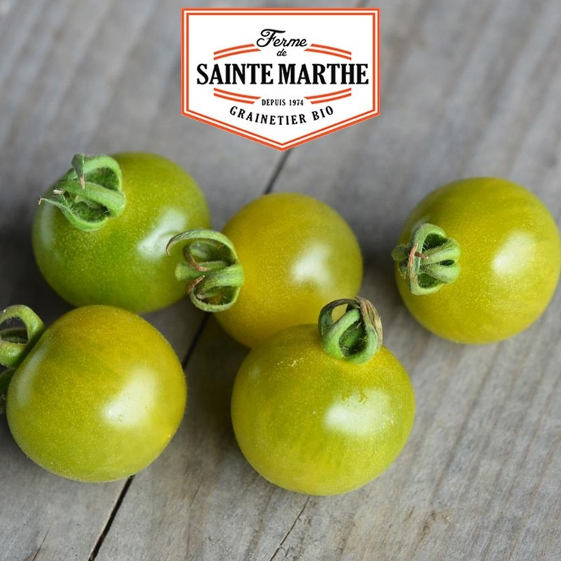 <x>La ferme Sainte Marthe</x> - 50 seeds Tomato Green Doctor's Frosted