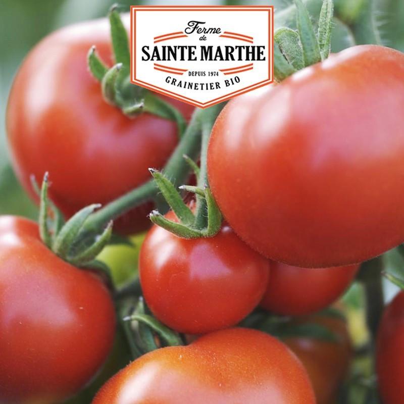 <x>La ferme Sainte Marthe</x> - 50 seeds Tomato Moneymaker