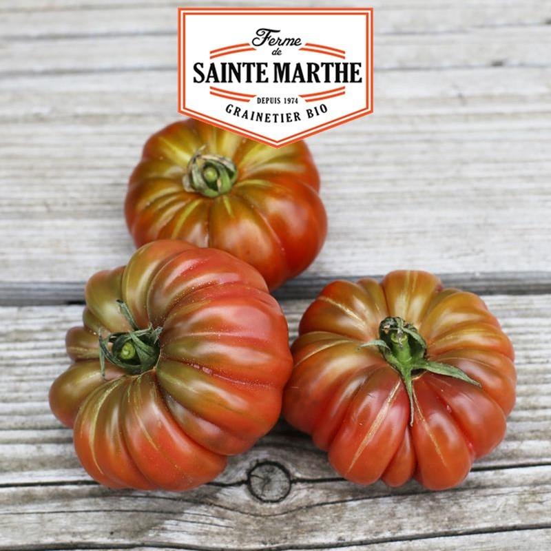 <x>La ferme Sainte Marthe</x> - 50 seeds Tomato Purple Calabash