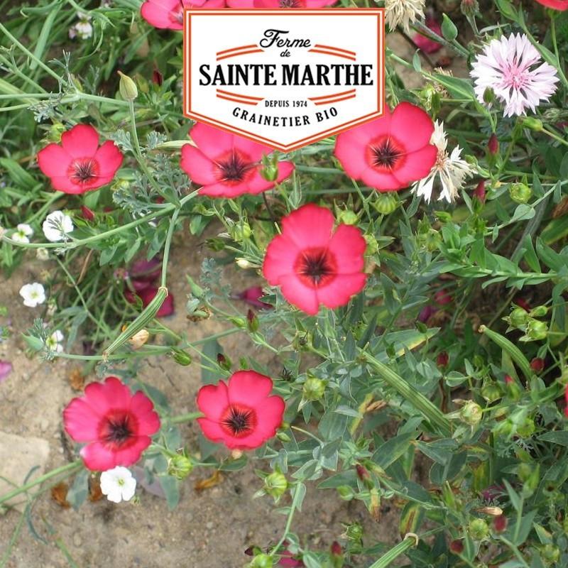 <x>La ferme Sainte Marthe</x> - 1,000 seeds Red Flax