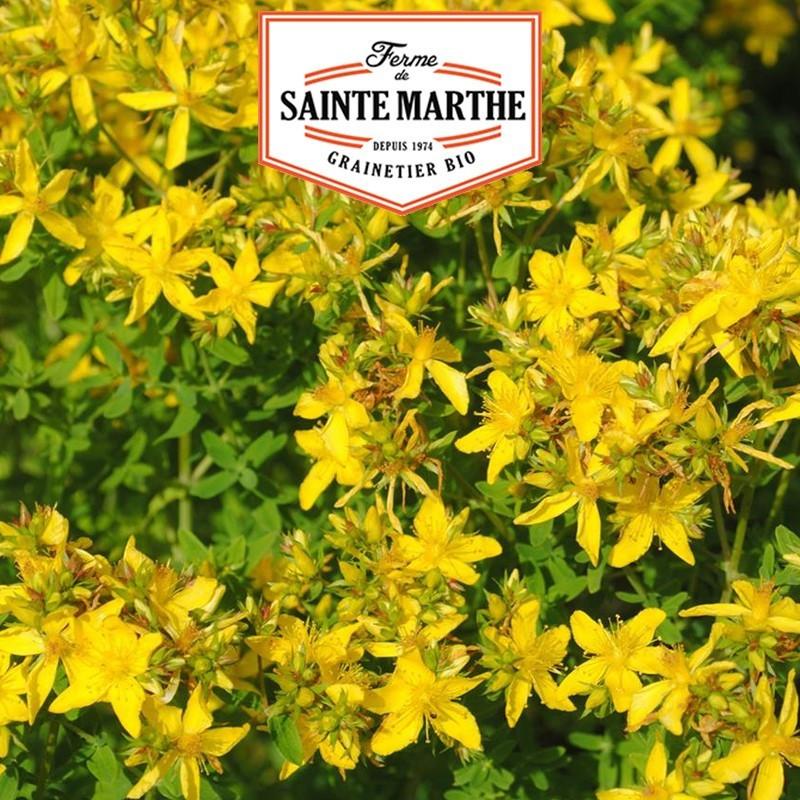 <x>La ferme Sainte Marthe</x> - 1,500 seeds St. John's wort Perforated
