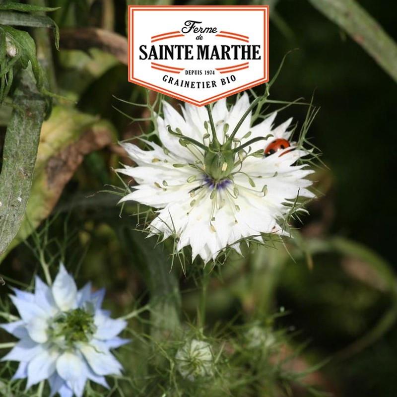 <x>La ferme Sainte Marthe</x> - 1,000 seeds Damascus Nigella Double Variety
