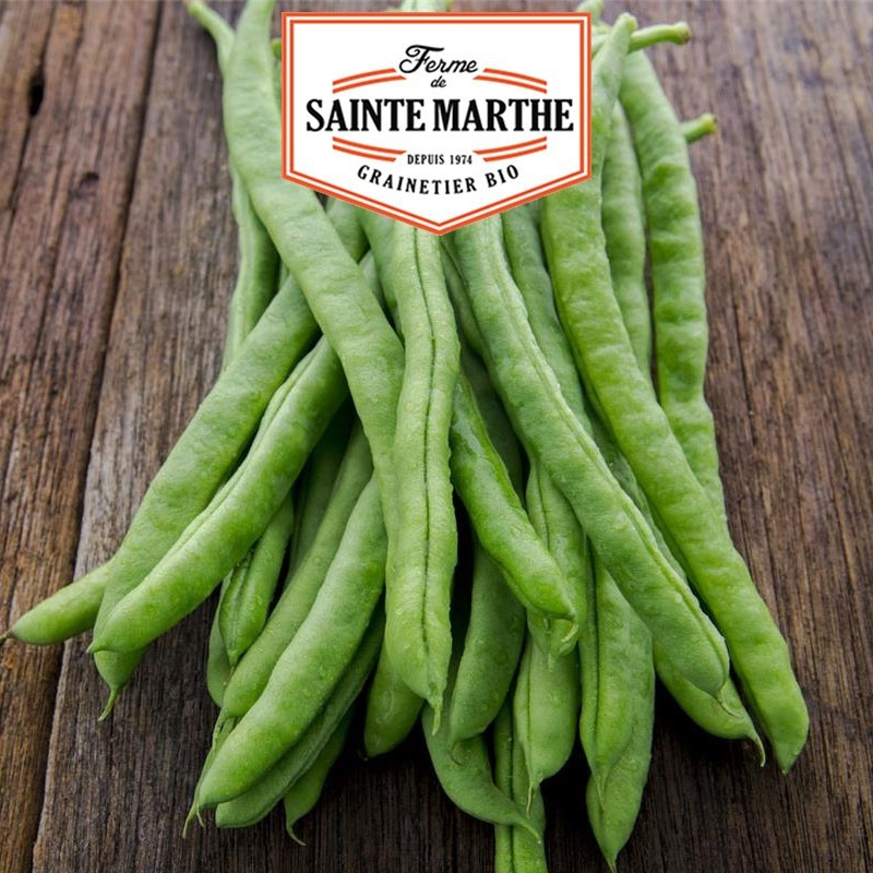 <x>La ferme Sainte Marthe</x> - 80 grams Neckarkonigin Mango Beans