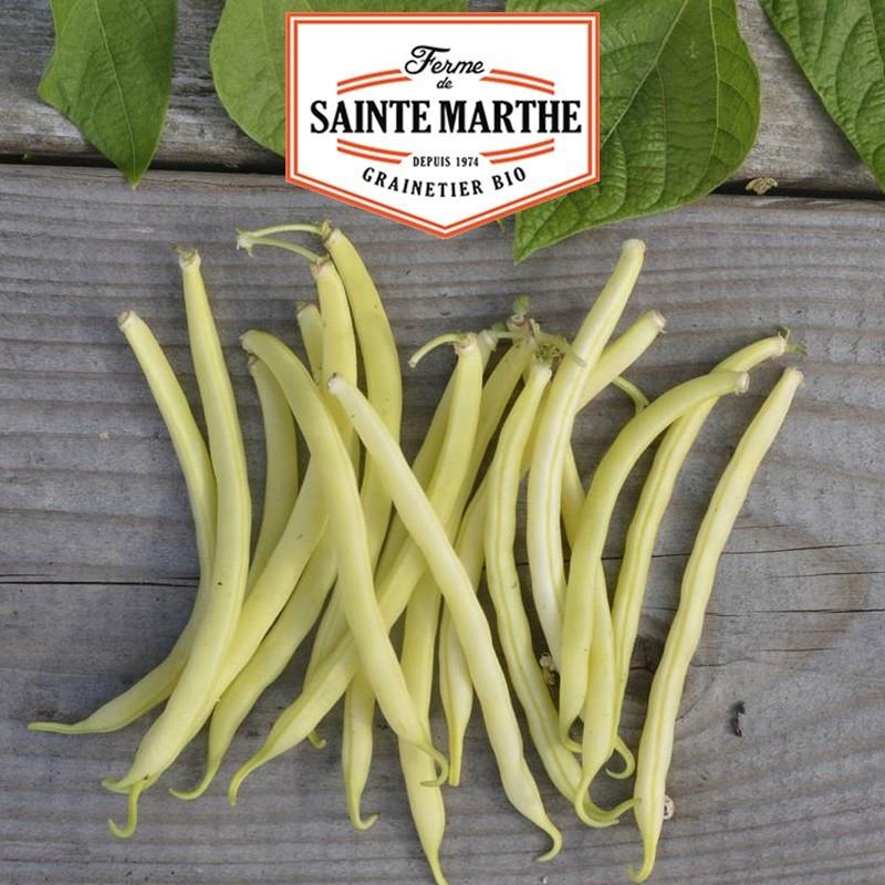 <x>La ferme Sainte Marthe</x> - 80 grams Dwarf Bean Major Mango