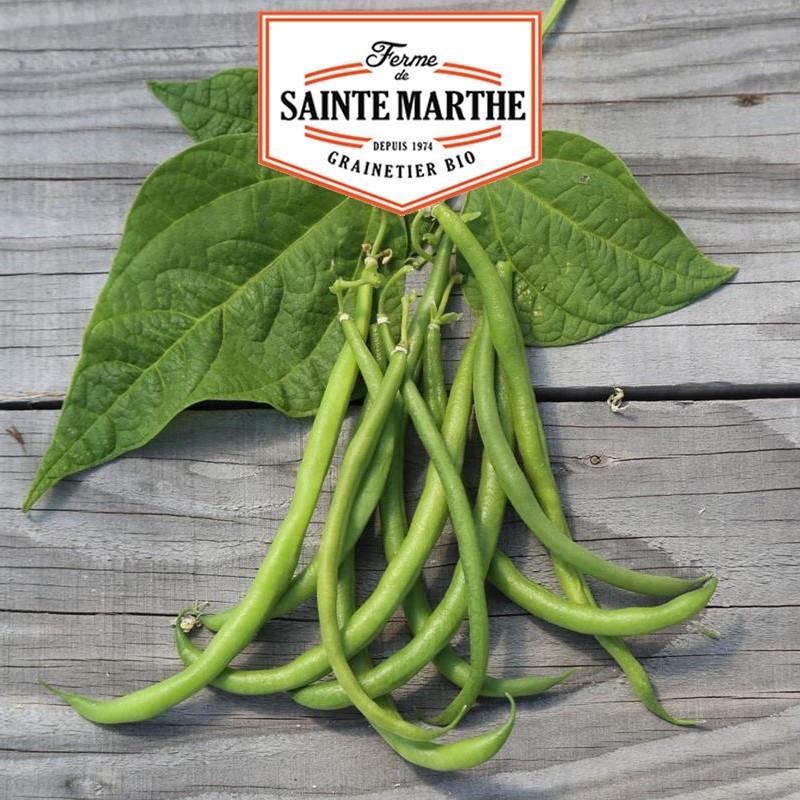 <x>La ferme Sainte Marthe</x> - 80 grams Pongo Dwarf Bean Pongo Filet Mangetout