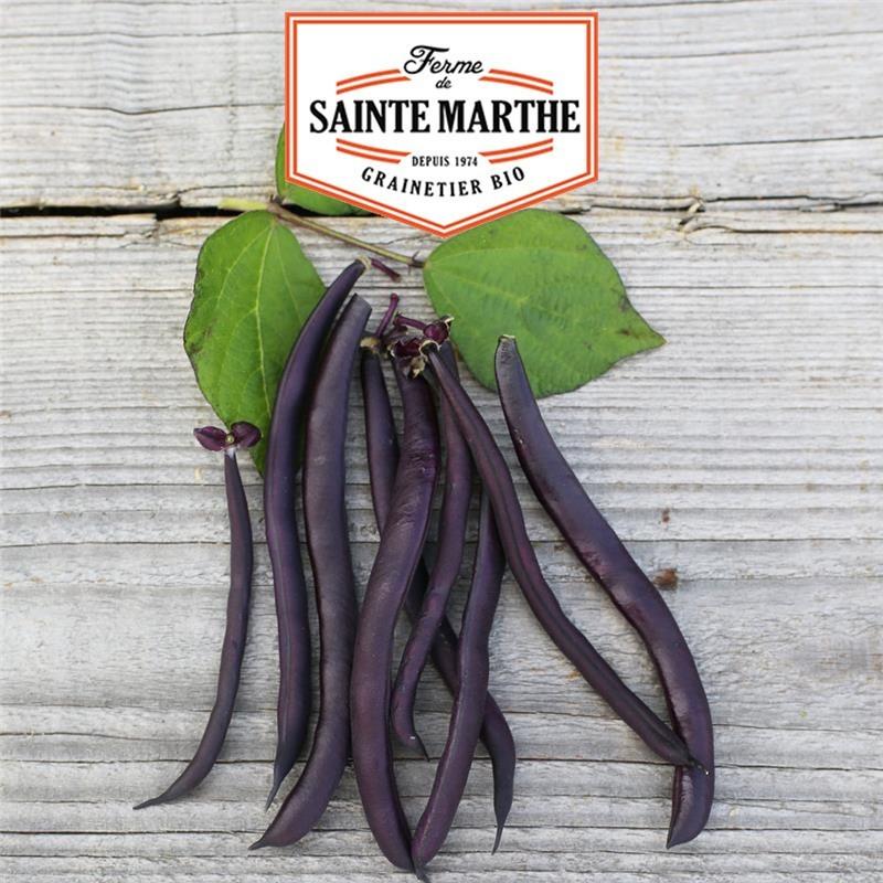 <x>La ferme Sainte Marthe</x> - 80 grams Bean Dwarf Purple Queen Cordless Bean Bean