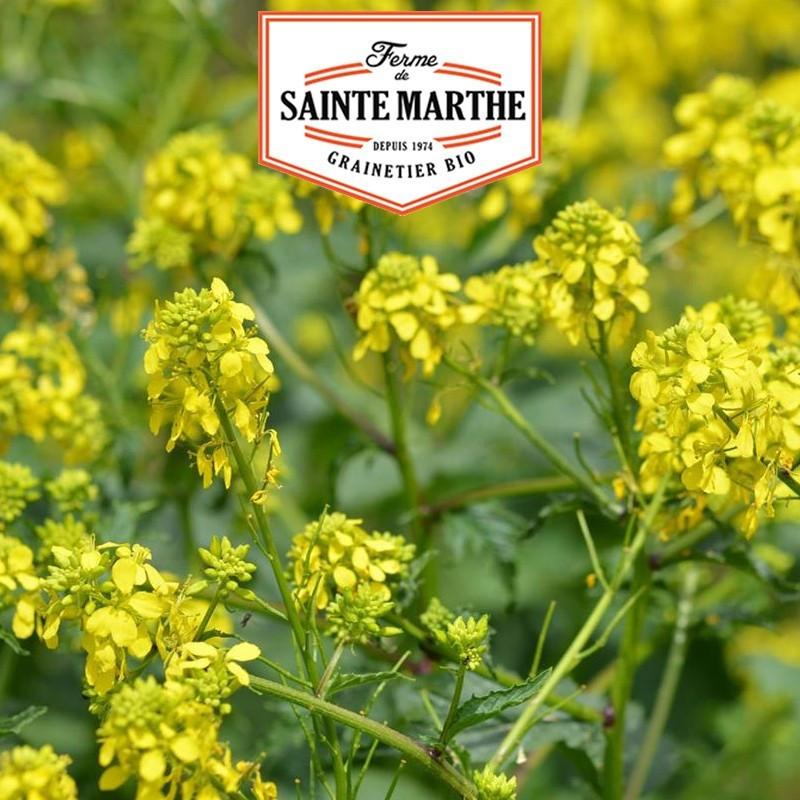 <x>La ferme Sainte Marthe</x> - 300 grams White Mustard