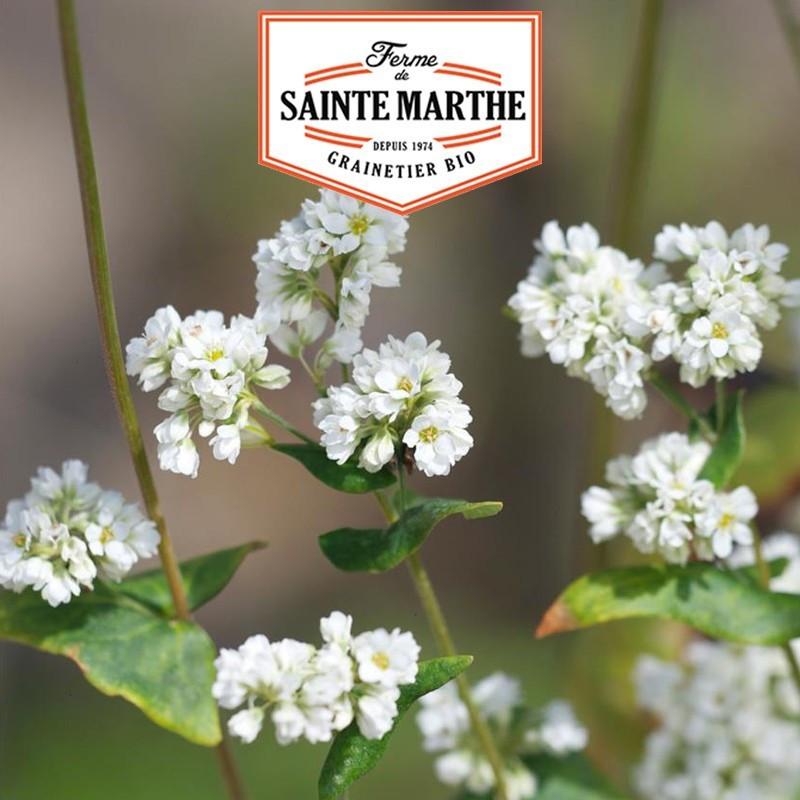 <x>La ferme Sainte Marthe</x> - 400 grams Buckwheat