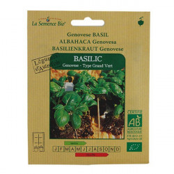 Organic seeds - Basil Genovese seed - organic