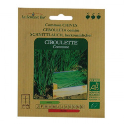 Organic seeds - Chives Common seed - organic