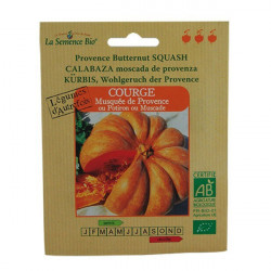 Organic seeds - Butternut Squash from Provence - seed organic
