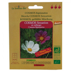 Organic seeds - Cosmos Sensation Mixed - seed organic