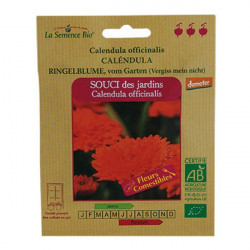 Graines Bio - Souci Des Jardins Calendula - semence biologique