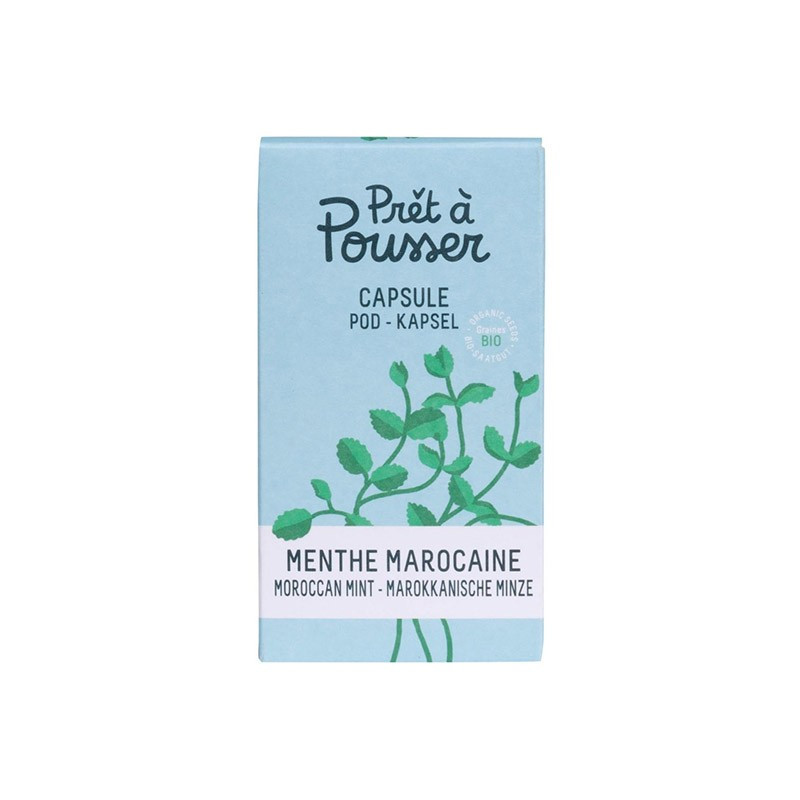 Organic seeds - Moroccan mint capsule - Prêt à pousser