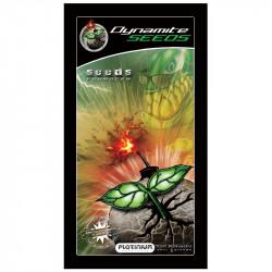 Platinium dynamite Seeds 1gr