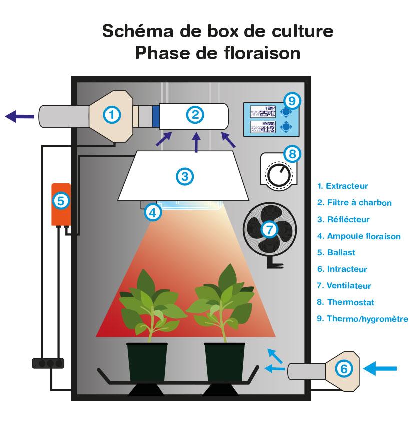 Box de culture indoor discount - Chambre de culture 150x150x200 ...
